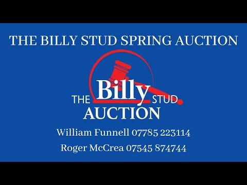 William introduces the auction horses