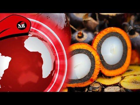Palmový olej není zlo a 200 Kč za hodinu pro brigádníka - NR Den 30.11.2018