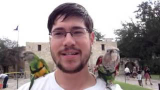 Parrots Visit the Alamo in San Antonio Texas