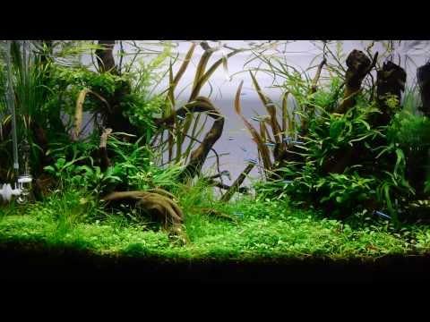 Piece of the underwater world