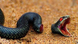 10 Terrifying Animals That Live After Death