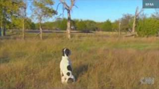 Dog waits for deceased man to return home