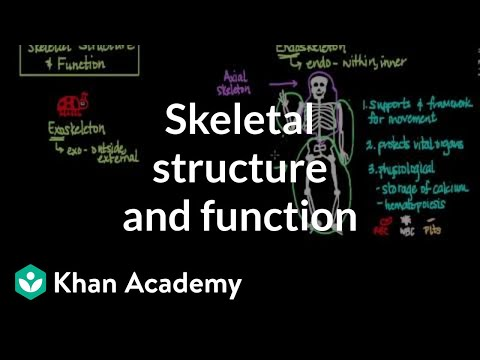 Skeletal structure and function (video) | Khan Academy