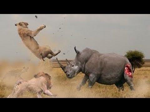 Best Of Animal Attacks 2017 | Wildlife Videos(New)