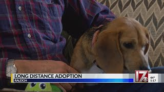 Alaskan Couple Travels 3,810 Miles To Adopt Beagle From Triangle Rescue