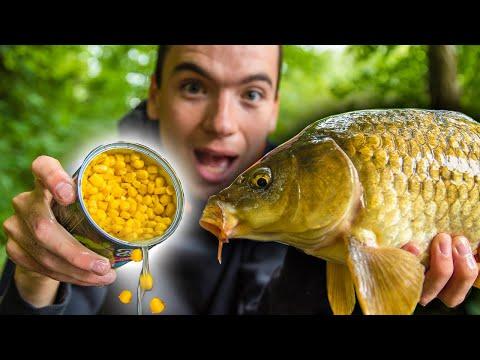 Fiskeri efter karpe med majs på bundrig