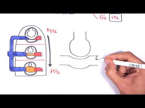 Pulmonology – Ventilation and Perfusion (V:Q Ratio) Physiology