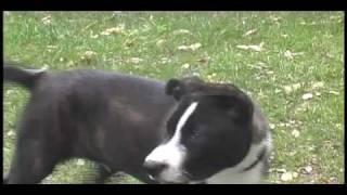 Aquabats - Canis Lupus