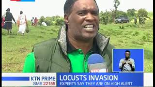 Insects expects advise farmers to use insecticides to cab locust invasion in East Africa