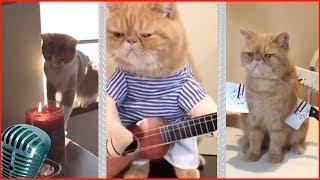 Приколы с котами #10 милые коты, lovely cats