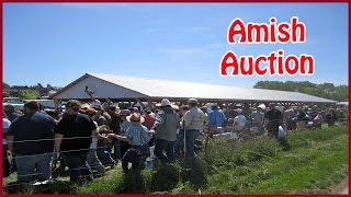 Amish Farm Auction - Scottsville, KY