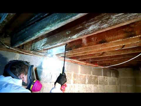 Homeowners Crawl Space in Hazlet, NJ Gets Mold