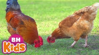 Cháu Yêu Bà, Một Con Vịt Xuân Mai - Nhạc Thiếu Nhi Vui Nhộn, Video con vật cho bé ăn ngon