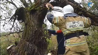 В Новгородской области продолжают ликвидировать последствия сильного урагана