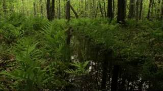 Take 5: The Forest Awakens - Nature Sounds for Stress Relief