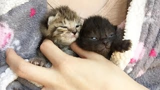 Amazing Transformation of Two Little Cats Were Only 1 Week Old Need To Bottle Feed