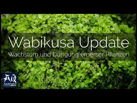 WABIKUSA ENTWICKLUNG & DÜNGUNG | Do!aqua be bright Dünger für emerse Wasserpflanzen | AquaOwner