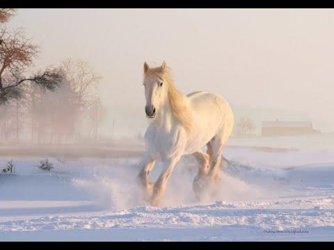Le petit Cheval Blanc  Georges Brassens - Youtube André Saad Visite gratuite