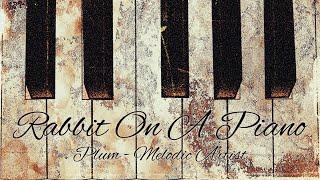 토끼처럼 통통 튀는 피아노곡 / Rabbit on a Piano by Plum