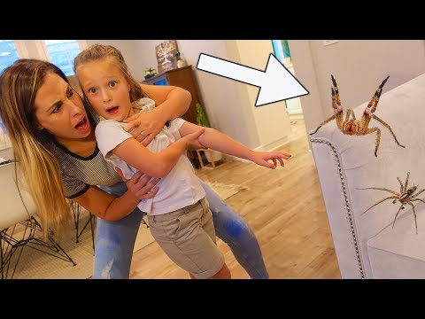 SCARY SPIDER ATTACK AT HOME! 🕷 Extremely Poisonous Spider