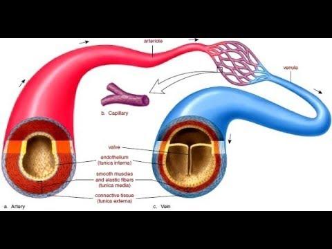 Preparazioni per lipertensione aterosclerosi