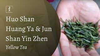 Tea Drunk Tea Travels: Huo Shan Huang Ya and Jun Shan Yin Zhen