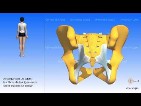Osteocondrosi della colonna vertebrale lombare 1-2st-sacrale