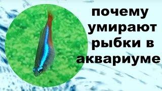 Рыбки всплыли и хватают ртом воздух
