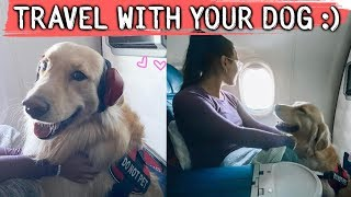 First Time Flying with My Dog! DO's & DON'TS :)