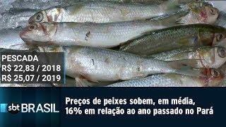 Preços de peixes sobem, em média, 16% em relação ao ano passado no Pará | SBT Brasil (17/04/19)