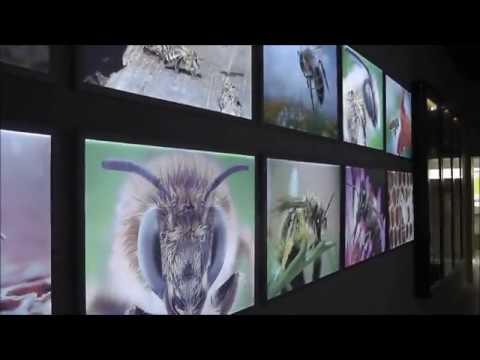 Кассетный пчелопавильон Берендей в павильон Пчеловодство на ВДНХ