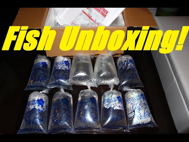 Unboxing New Live Tropical Aquarium Fish