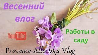 Весенний влог с фиалками /планировка клумбы с цветами/provenceallochka vlog