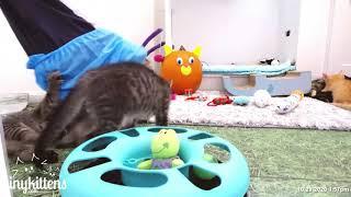Kittens v. Breanne