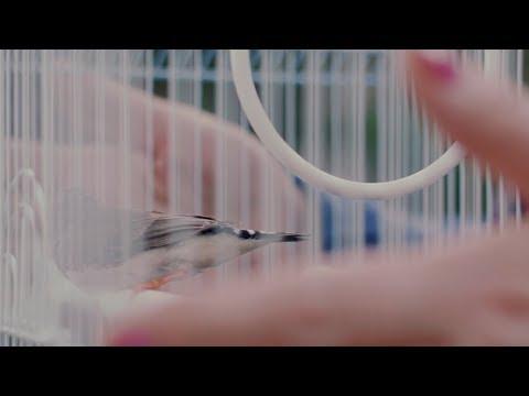 Vinyl Theatre: 30 Seconds [OFFICIAL VIDEO]