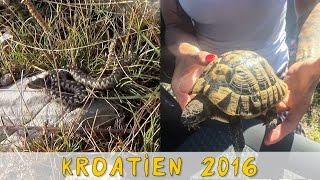 Reptil TV - Folge 96 - Vipern und Landschildkröten Jagt auf Kroatien