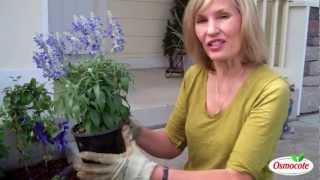 How To Plant Annuals From A Container