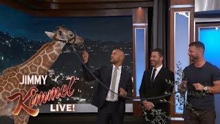 Adorable Baby Animals with Dave Salmoni & Keegan-Michael Key - Video Youtube