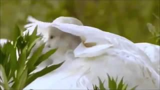 Смотреть онлайн Завораживающие кадры диких животных