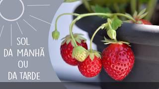 Como ter plantas frutíferas em casa