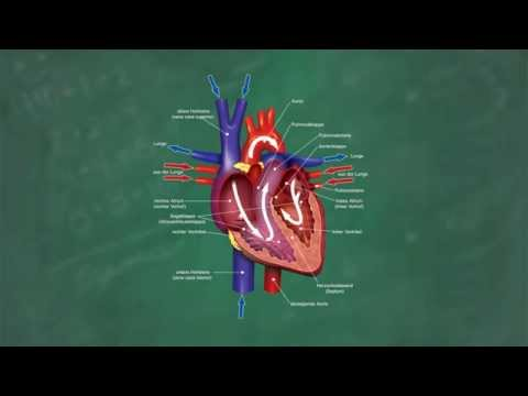 Physiomer hypertensive Analoga