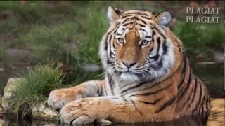 12 животных что скоро могут вымереть. .12 самих редких животных.