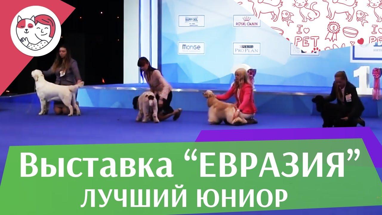 Best in show Лучший юниор 19 03 17 на Евразии ilikepet