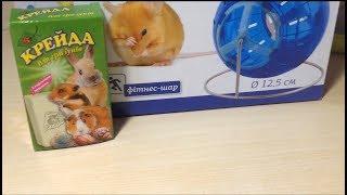 Открываем подарки для хомячка Стёпы. День рождения маленькой зверюшки.