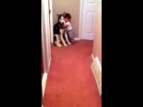 Lapsi säikähtää imuria ja menee halaamaan koiraa