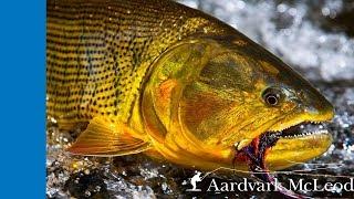 Tsimane 3X - Fly Fishing For Golden Dorado in Bolivia