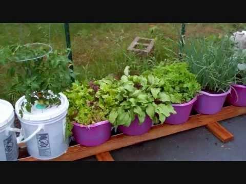 Rain Gutter Hydroponics System On Grow Aquaponically