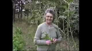 """Fall of 1983 """"Mama"""" Gathering Vegetables from Garden in Wesson, Mississippi"""