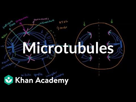Microtubules Biochemistry Medbullets Step 1