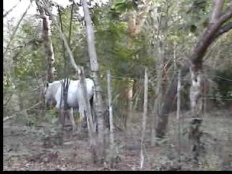 Campesino Hasta La Cacha - Julio Pantoja  (Video)